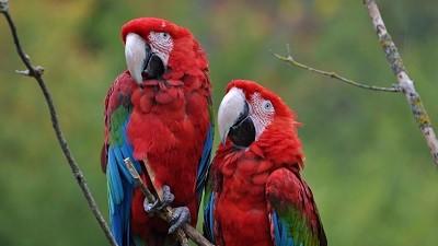 Burza drobného zvířectva a okrasného ptactva - březen
