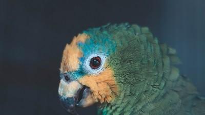 Burza drobného zvířectva a okrasného ptactva - duben