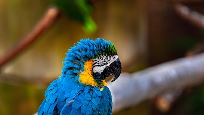 Burza zvířectva a ptactva - prosinec